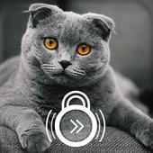 The British Shorthair Kawaii Kitten Lock Screen icon