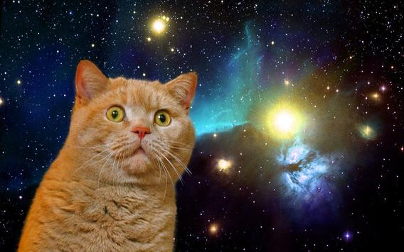 Cat Space Live Wallpaper Poster