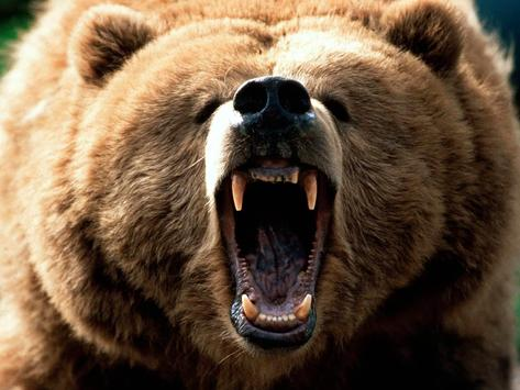 Bear Live Wallpaper apk screenshot
