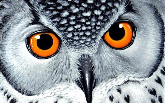 Owl Live Wallpaper apk screenshot