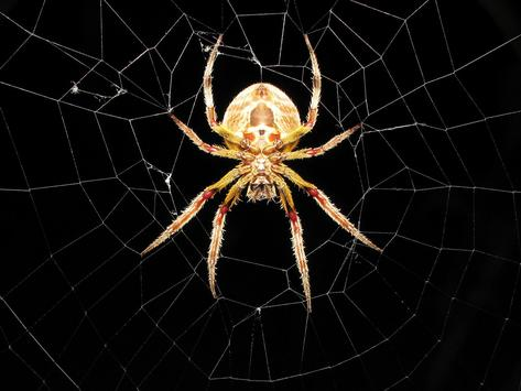 Spider Live Wallpaper apk screenshot