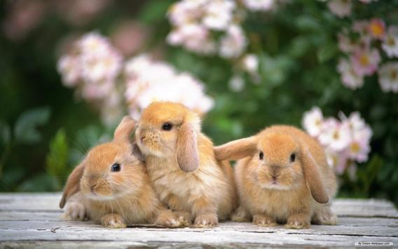 Rabbit Live Wallpaper apk screenshot