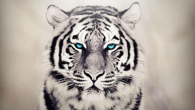 White Tiger Live Wallpaper poster