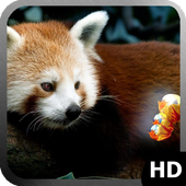 Red Panda Wallpaper icon