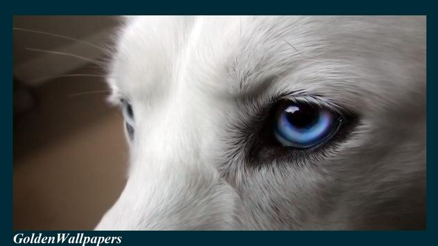 Wolf Eyes Wallpaper apk screenshot