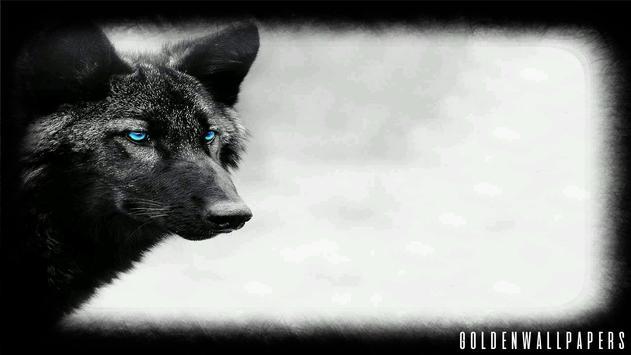 Black Wolf Wallpaper poster