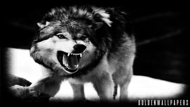 Black Wolf Wallpaper screenshot 1