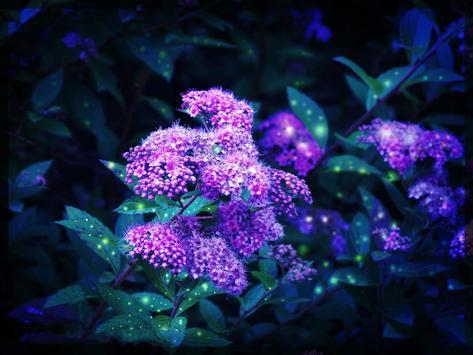Glowing Flowers Live Wallpaper apk screenshot