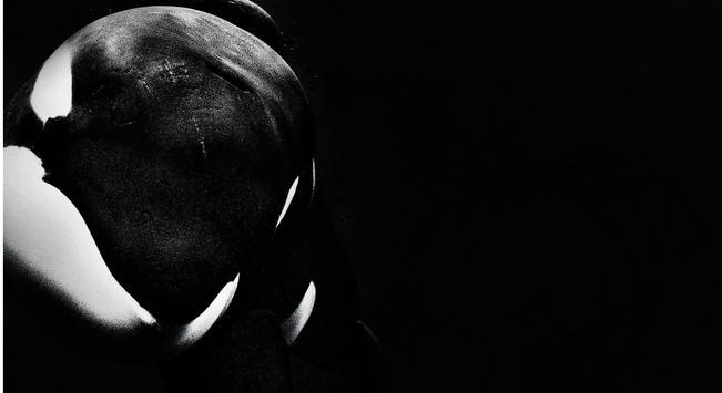 Orca Live Wallpaper apk screenshot