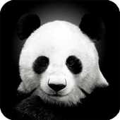 Panda Live Wallpaper Animal icon