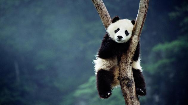 Panda Live Wallpaper Animal screenshot 3