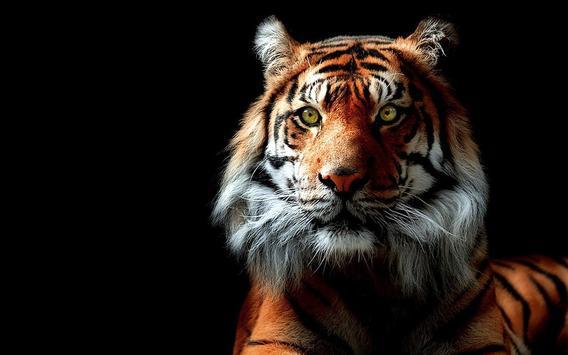 Tiger Live Wallpaper Aninal poster