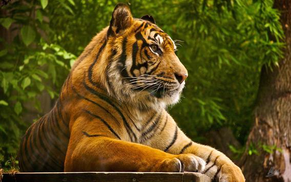Tiger Live Wallpaper Aninal apk screenshot