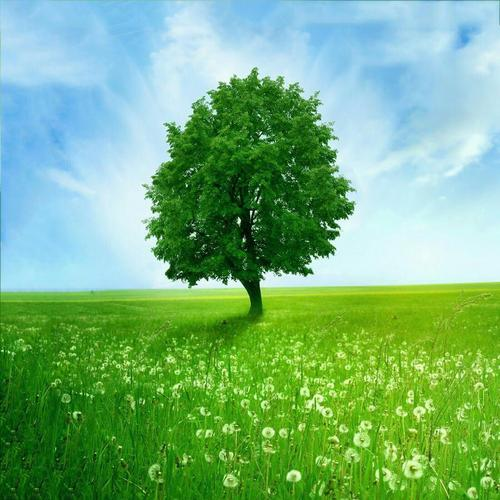 Green nature live wallpaper for android apk download - Nature wallpaper apk ...