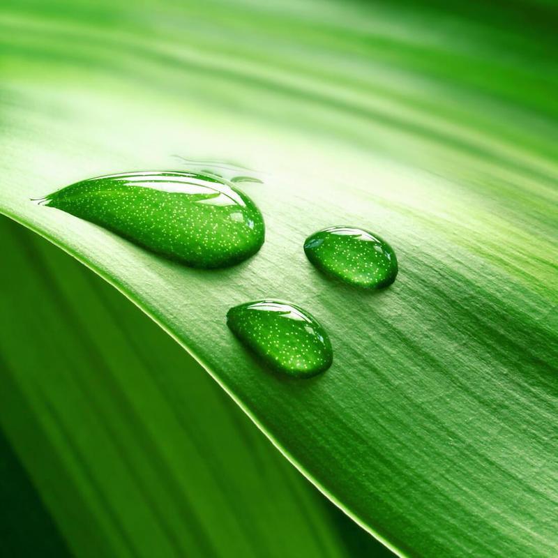 Naturaleza Verde Fondos For Android