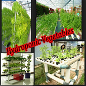 Hydroponic Vegetables icon