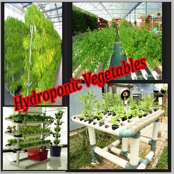 Hydroponic Vegetables poster
