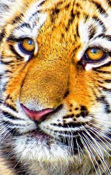 Panthers HD Wallpapers apk screenshot