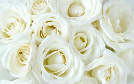 Rosas Blancas Wallpapers 65905 Pixhd