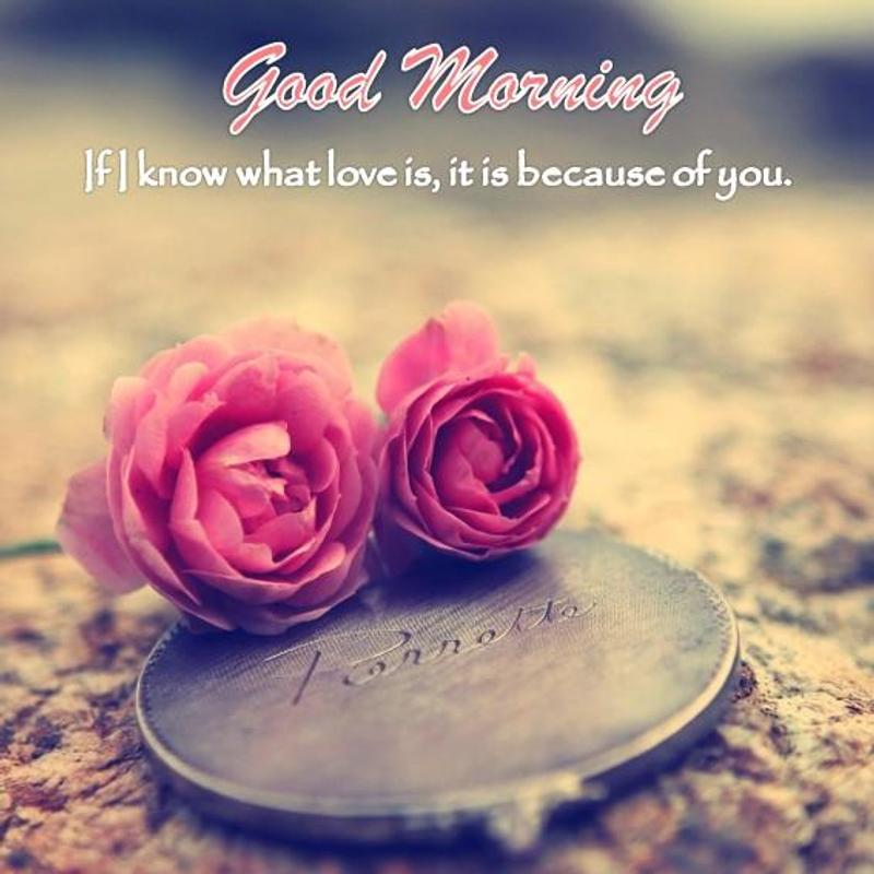 Good Morning Love Message For Android