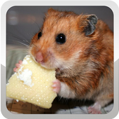 Hamster Wallpaper icon
