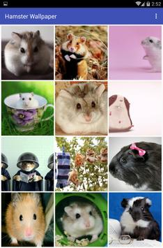 Hamster Wallpaper apk screenshot