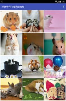 Hamster Wallpapers poster