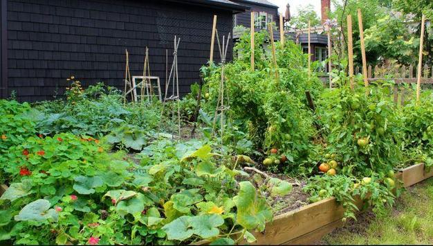 Home Vegetable Garden poster