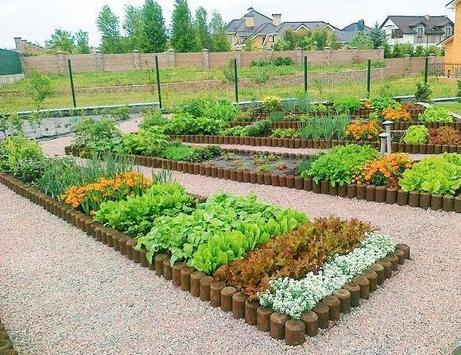 Home Vegetable Garden screenshot 1