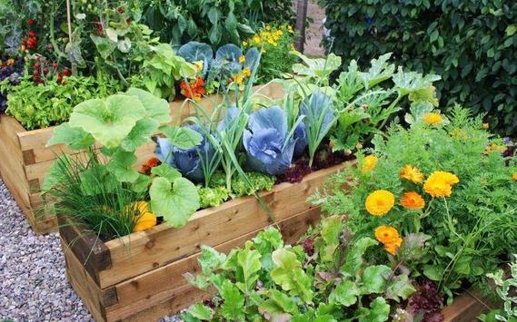 Home Vegetable Garden screenshot 2