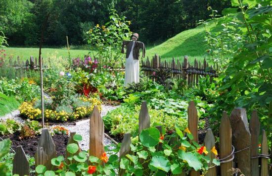 Home Vegetable Garden screenshot 3