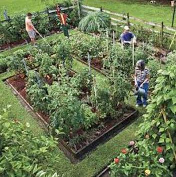 Home Vegetable Garden screenshot 4