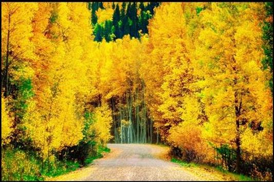 Road in Autumn Forest Wallpapers poster