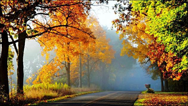 Road in Autumn Forest Wallpapers apk screenshot