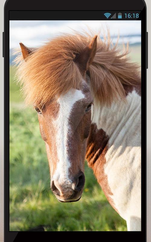 live horse wallpaper