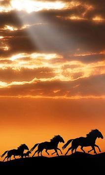 Horse Live Wallpaper screenshot 4