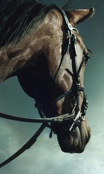 Horse Live Wallpaper screenshot 5