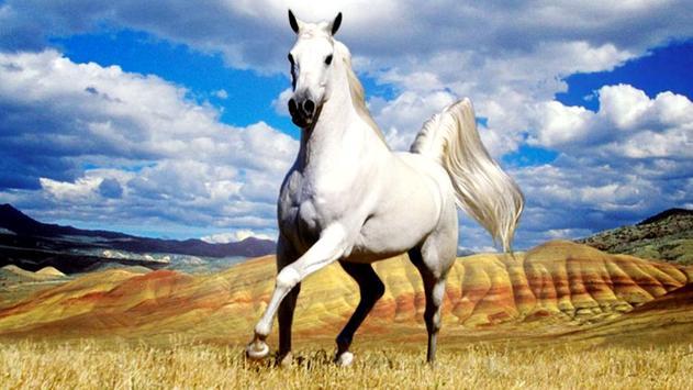 Horse Live Wallpaper screenshot 7