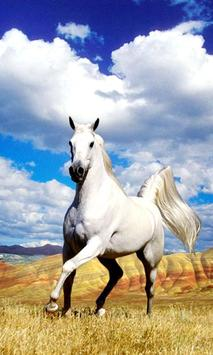 Horse Live Wallpaper screenshot 1