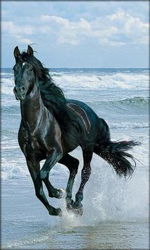 Horse Live Wallpaper screenshot 2