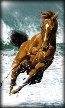 Horse Live Wallpaper apk screenshot