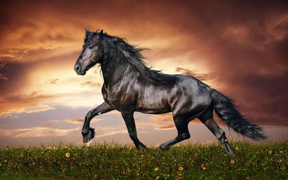 Horse Pictures Live Wallpaper screenshot 6