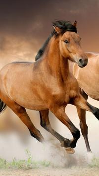 Horse Pictures Live Wallpaper apk screenshot