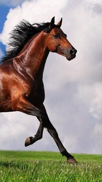 Horse Pictures Live Wallpaper screenshot 2