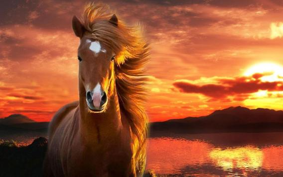 Horse Live Wallpaper For Android Apk Download