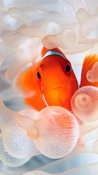 Wallpaper Fish HD screenshot 5