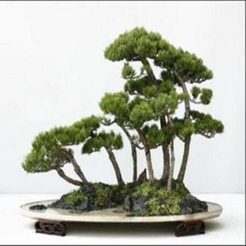 Japanese Bonsai Design Idea screenshot 3
