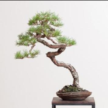 Japanese Bonsai Design Idea screenshot 6