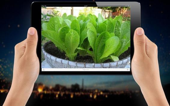Minimalist Vegetable Garden Ideas screenshot 2