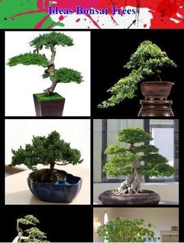 Ideas Bonsai Trees poster